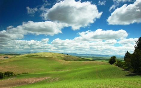 Green pasture and blue sky