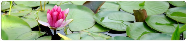 lotus-banner-rounded